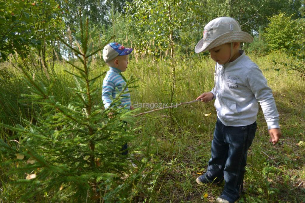 дети ищут грибы