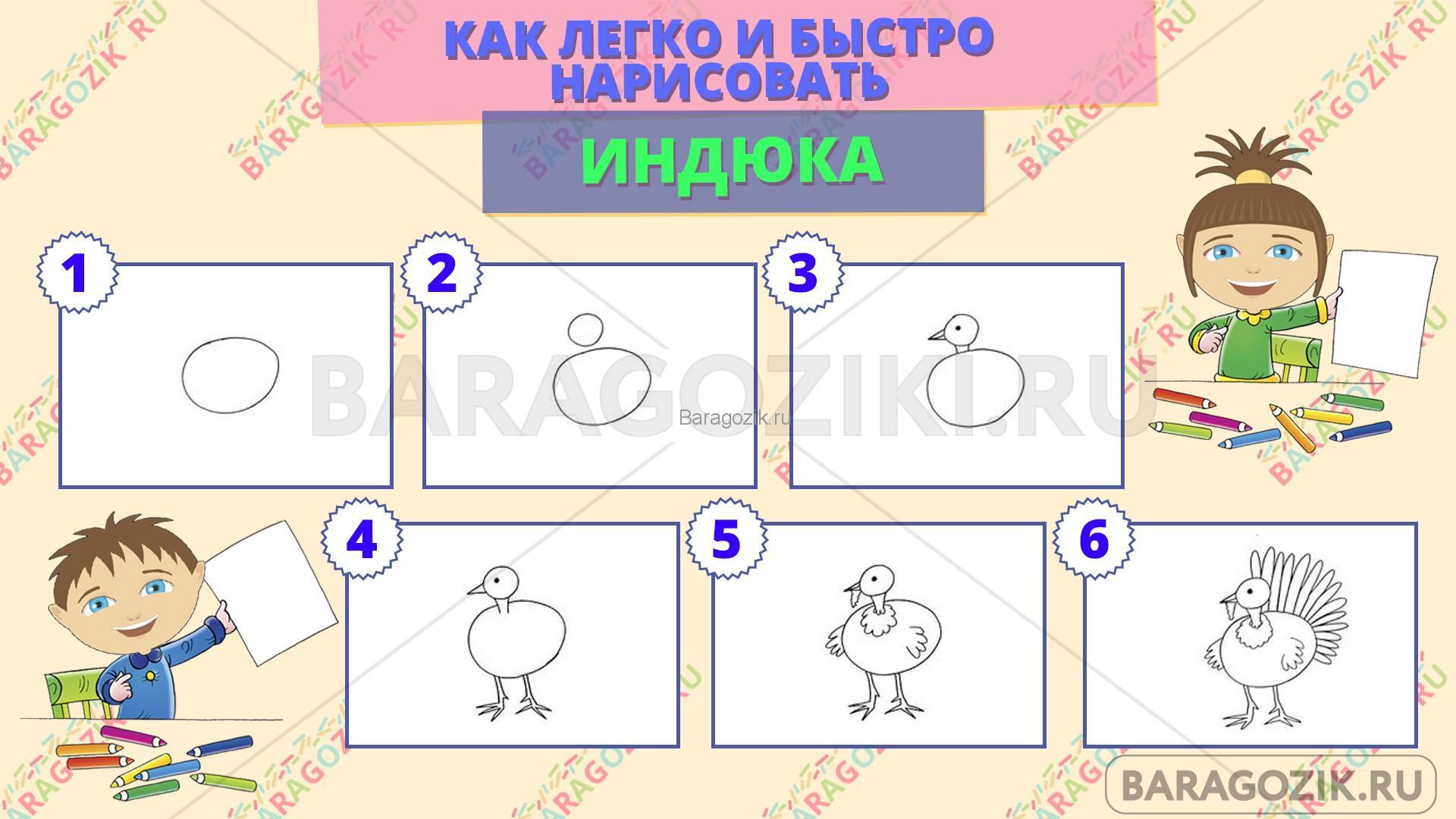 как легко нарисовать индюка - пошаговая схема