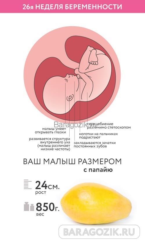 Как выглядит ребенок на 26 неделе акушерского срока беременности