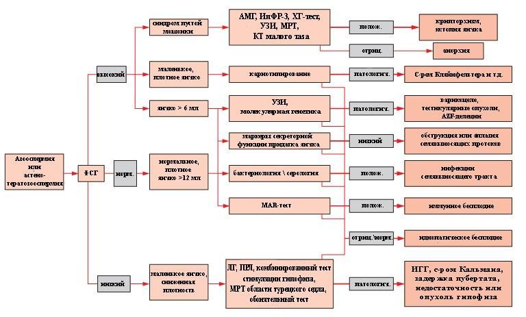 Алгоритм обследования мужчины при выявлении патологии сперматозоидов
