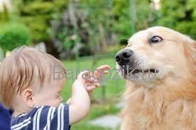 ребенка укусила собака