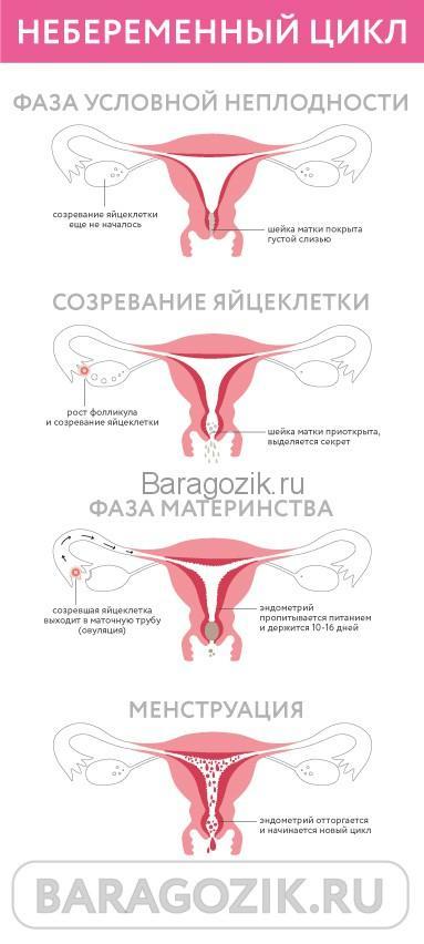 Беременность 1 неделя