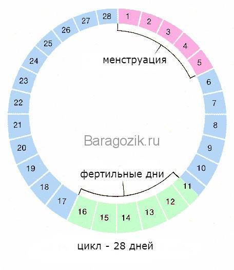 Фазы цикла у женщин таблица