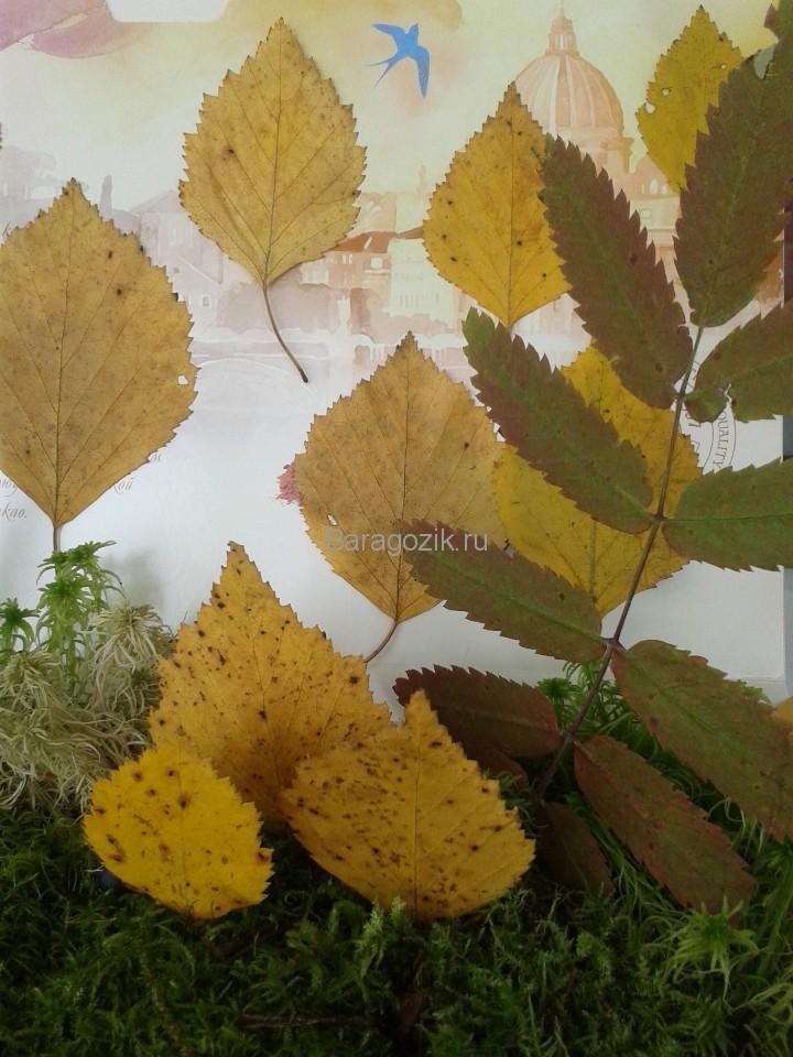 Осенний лес 4