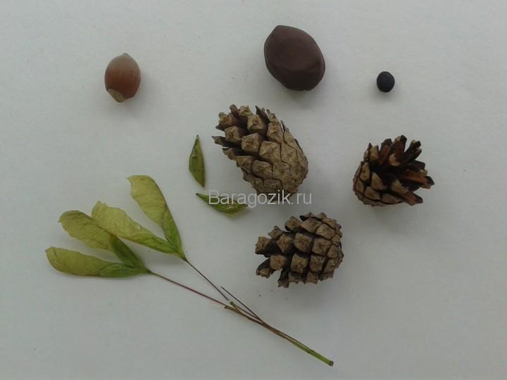 Осенний лес 8
