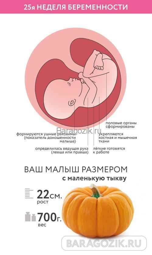 Как выглядит ребенок на 25 неделе акушерского срока беременности