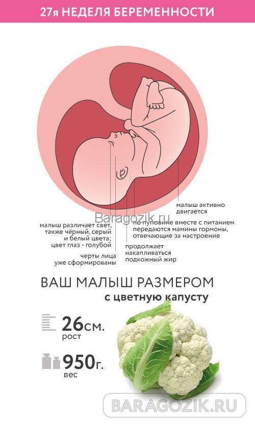 Как выглядит ребенок на 27 неделе акушерского срока беременности