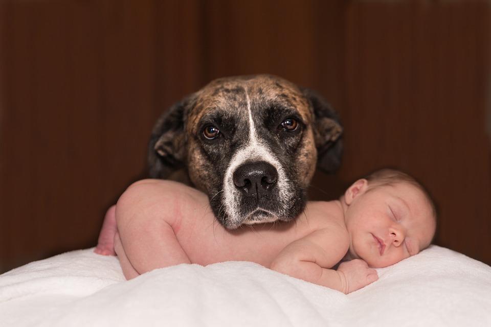 приучить ребенка к уходу за собакой